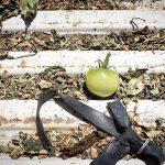 篠崎さんちの緑トマト
