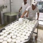 ミラノでのチーズ造りです