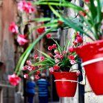 トロペアの裏路地に、お花溢れる道を一本発見