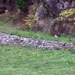 Il Parco Nazionale del Gran Paradiso にはたくさんの種類の動物がいました