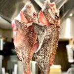 愛知県産天然鯛