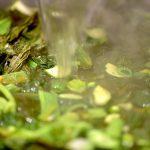 ズッキーニの葉を乾燥、発酵させたのちに、ズッキーニの葉茶を造ります