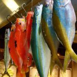 釣り物のお魚をたくさんいただきました!!
